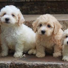 New puppy litter