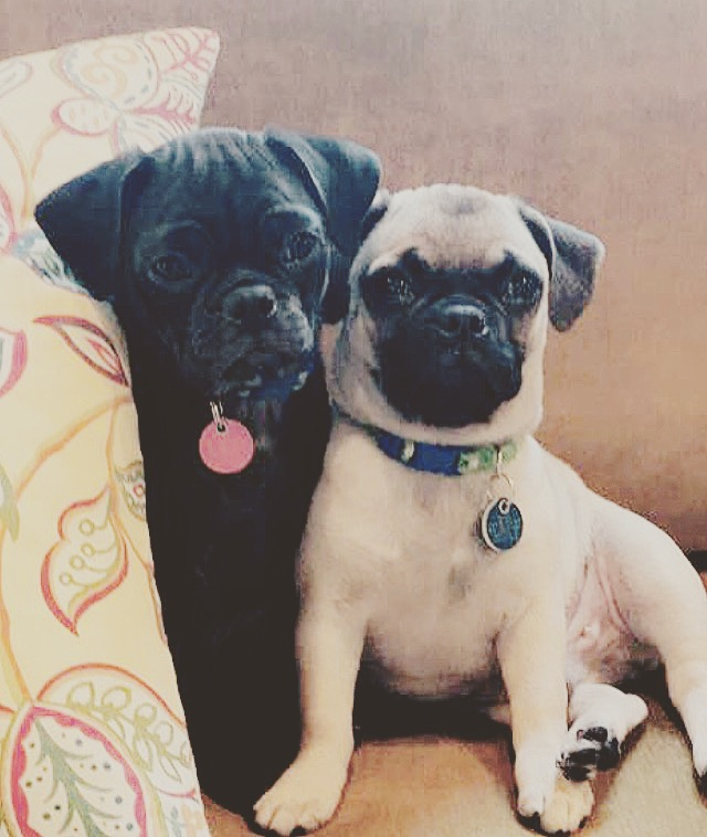 Bean and Barkley October 2017