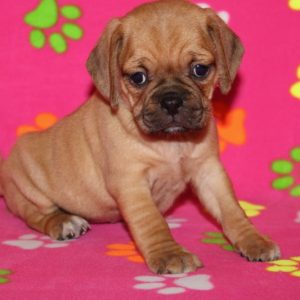 Claire-Puggle