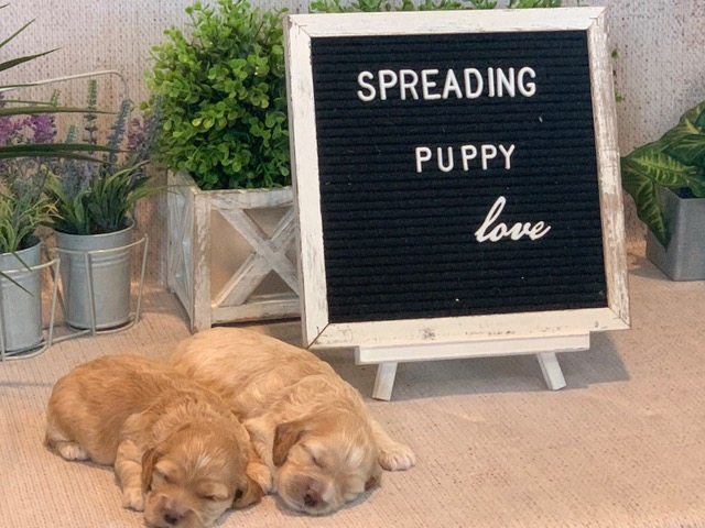 puppy place sign