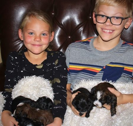 puppy place family involvement